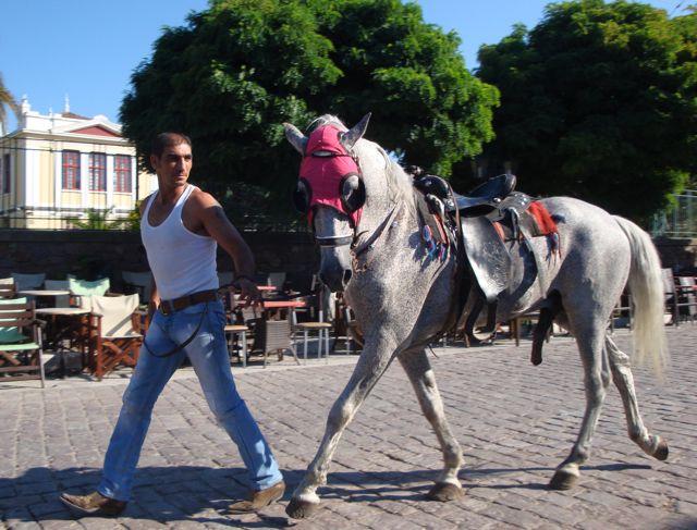 Agia Paraskevis Horse Races, Lesvos